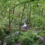 Die Waldkur: Warum ein Spaziergang im Grünen die Antwort auf quälende Fragen im (Berufs-)Alltag sein kann