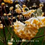 Als Mensch aufblühen wie die Blumen im Frühling